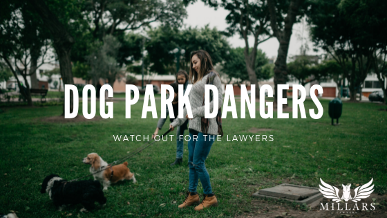 Dog Park Dangers: Watch Out For the Lawyers